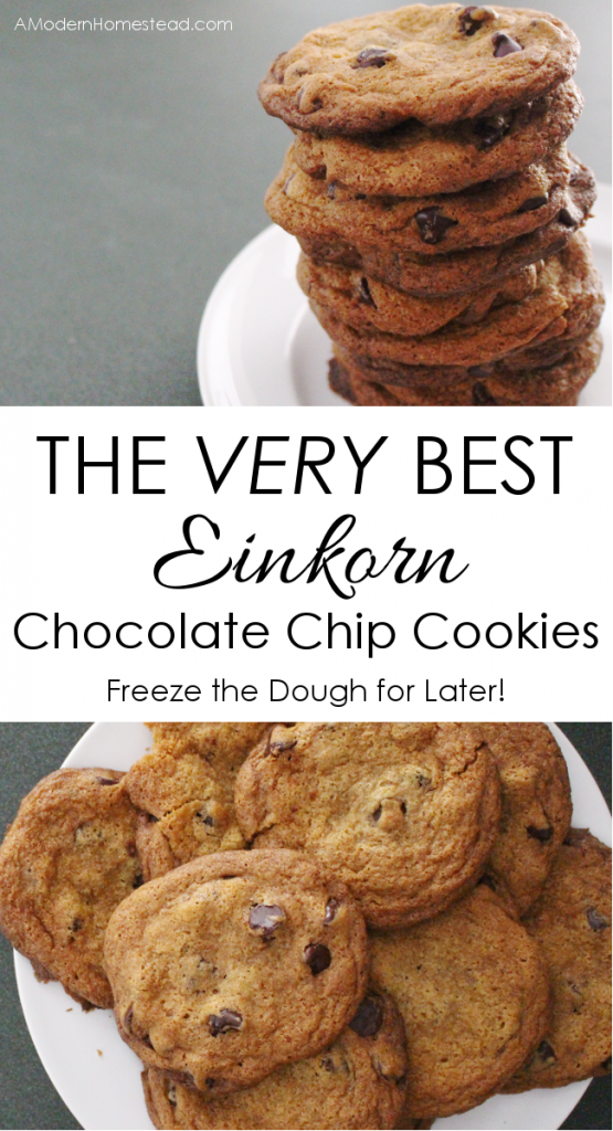 The very best einkorn chocolate chip cookies!! This is seriously a game changer! I make a HUGE batch of these and then I can enjoy fresh cookies for months! Love it!!