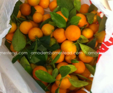 Candied Kumquats with a Surprise Bonus!