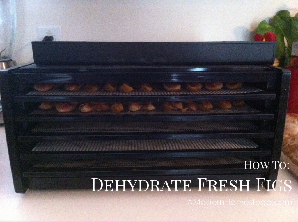 How to Dehydrate Fresh Figs. This is way easier than I thought it would be! Love figs!