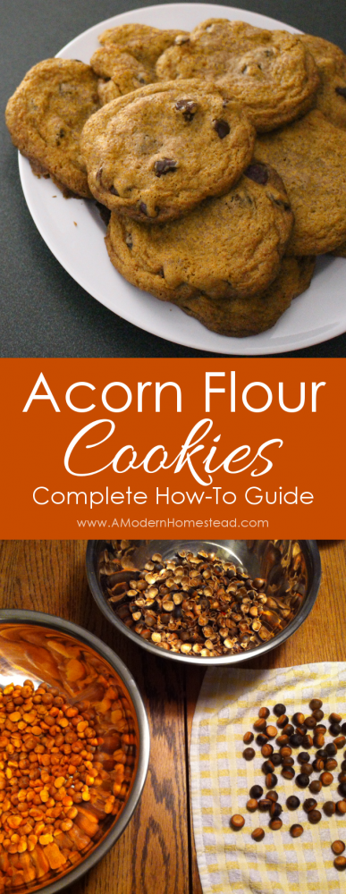 Acorn Flour Chocolate Chip Cookies are a great way to enjoy the splendors of Fall nature. It is also a really fun activity for kids as they get to learn how to make acorn flour from beginning to end!