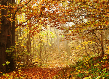 35 Ways to Enjoy Fall for Free! (Even When It's Hot Outside)