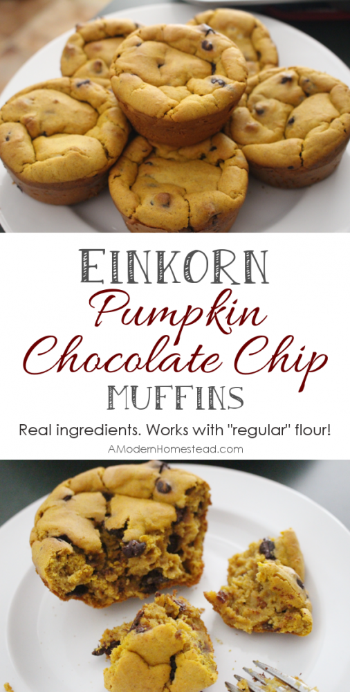 Pumpkin Chocolate Chip Muffins! Can't get enough pumpkin and chocolate this fall... and these look amazing!