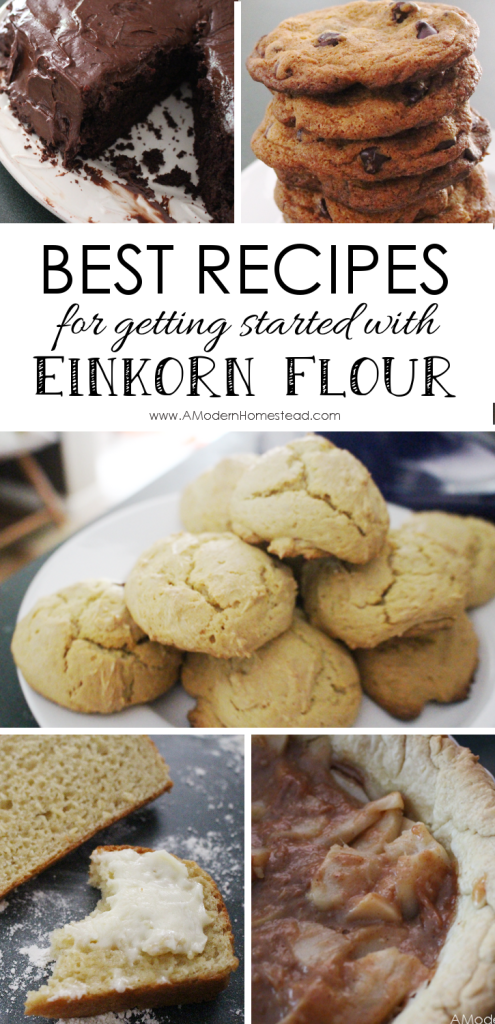 I've always wanted to try einkorn! This makes it look so easy!! And oh man do those recipes look amazing!