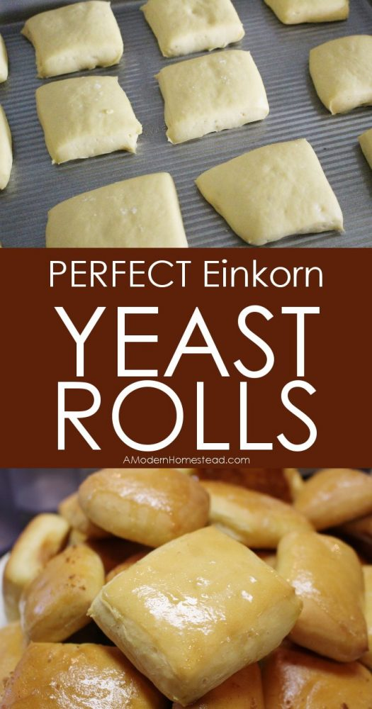 Yeast rolls make the perfect addition to any meal. Whether it's just a middle of the week lunch, or a special occasion with all the fixin's… a good yeast roll is always welcome!