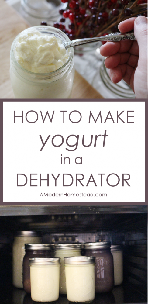 With all the yogurt making methods out there, making it in a dehydrator is by far the easiest! Find out exactly how to make yogurt in a dehydrator with these simple steps.