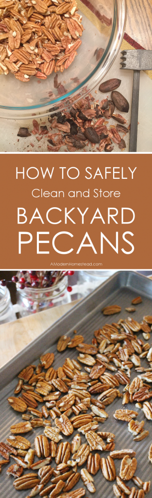 It's pecan season! But there are a few things you need to do in order to enjoy their wonderful meat safely. Find out just how to safely clean and store backyard pecans now!