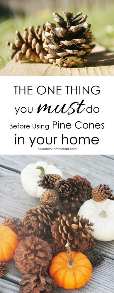 Find out exactly how to prepare your pine cones for indoor use in this post. No bleach, no vinegar. No waiting for days before you can use them! Pine cones are an easy and frugal way to decorate during the fall and winter seasons. But there is one thing you must do before using pine cones in your home, otherwise you could end up with bugs, mildew, or mold!