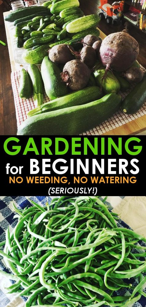 Beginner\'s Guide to Back to Eden Gardening