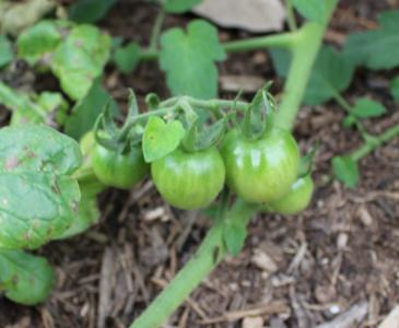 Beginner's Guide to Back To Eden Gardening