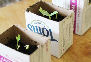 DIY Recycled Seed Starter