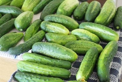 Preserving Cucumbers without Pickling