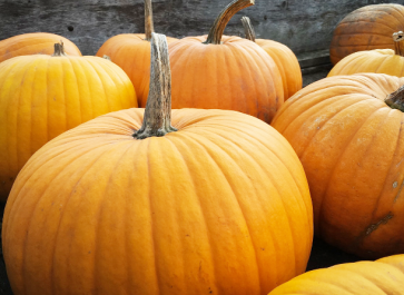 When to Plant Pumpkins for A Halloween and Thanksgiving Harvest