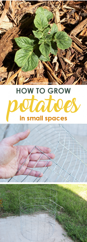 How To Grow Potatoes In Small Spaces