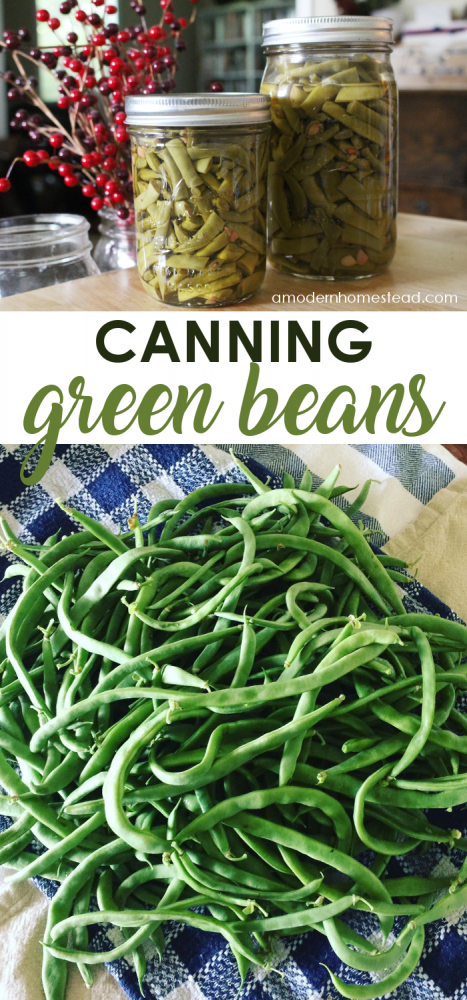 Canning green beans is an easy summer activity that allows you to enjoy them all year long! Find out how to can green beans in a pressure canner!