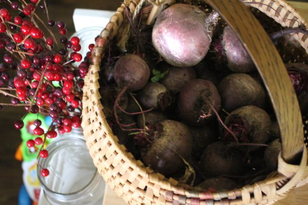 Garden fresh beets in a basket on the counter