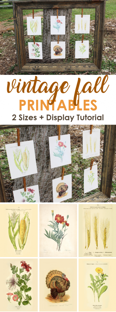 Fall printables with a vintage twist are here! Get these 6 free vintage printables for fall and add a pop of yesterday to your fall decor! Plus, get the details for this adorable display!