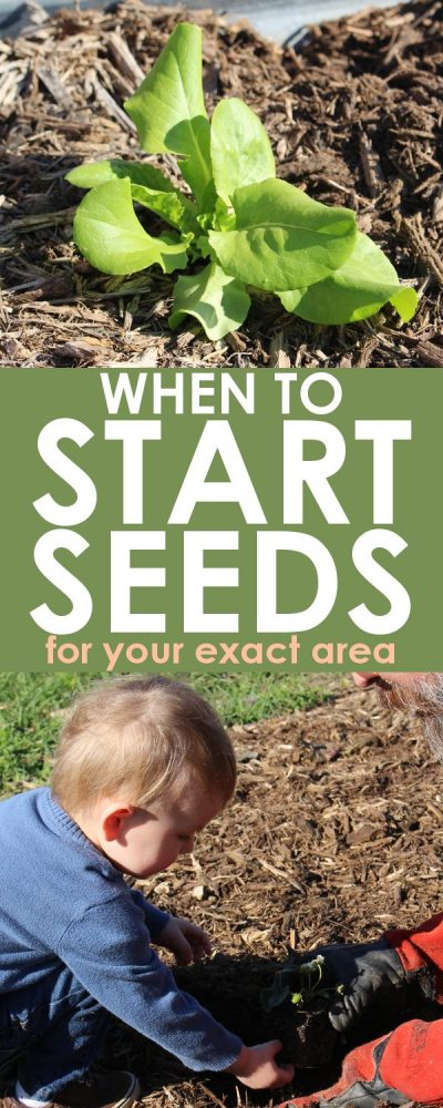 Seed Starting Planner for Any Zone | When to Plant Free Tool