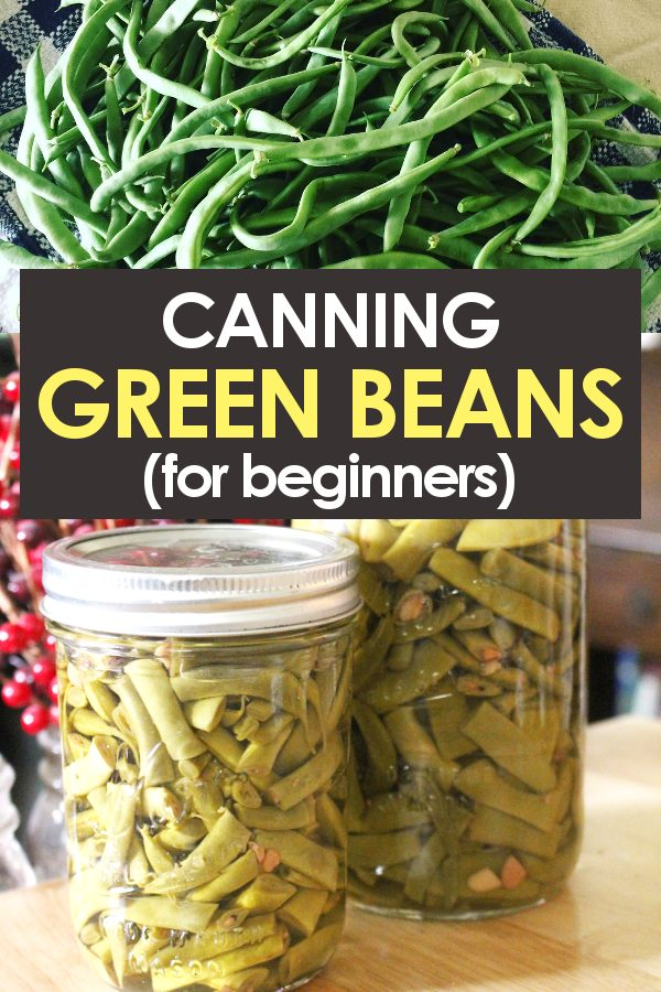 Fresh green beans before and after canning process