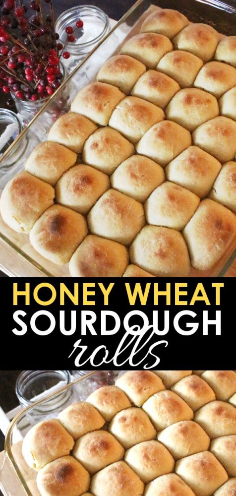 honey wheat einkorn sourdough rolls