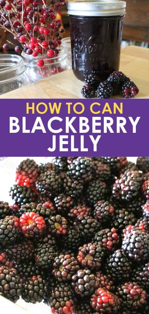Home canned blackberry jelly with fresh blackberries