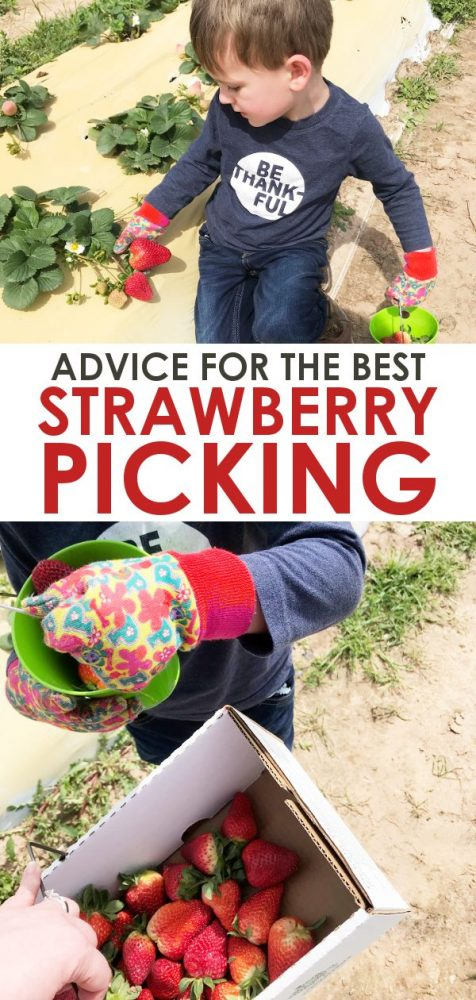 Information on strawberry picking