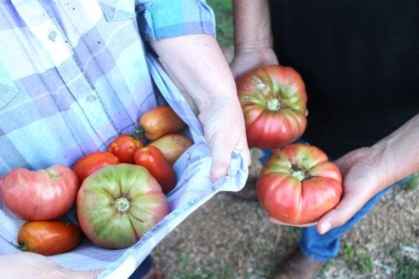 starting tomato seeds indoors