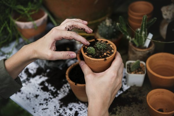 planting seedlings in small garden