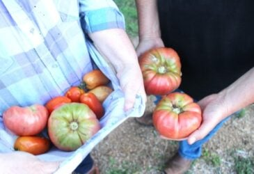 urban homesteaders holding homegrown tomatoes
