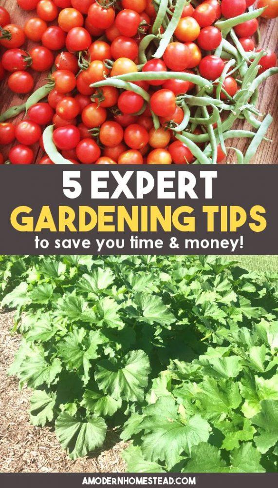Gardening tips and ideas for beginning gardeners