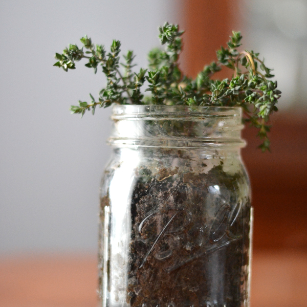 Indoor herb gardening with thyme in a mason jar
