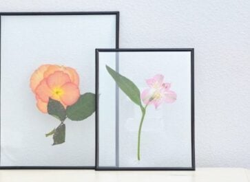 pressed flowers in frames on a white dresser