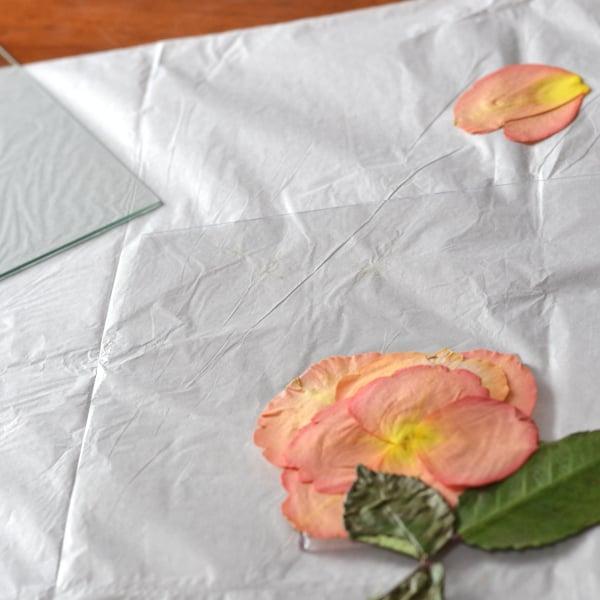 rose petals arranged in a floating frame