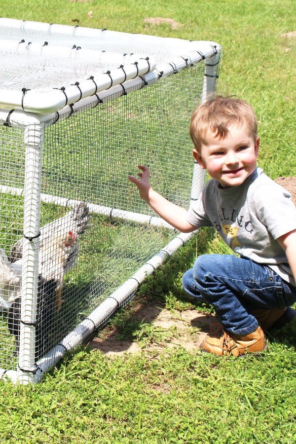 young child with backyard chickens