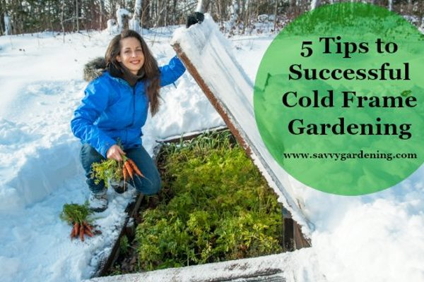 woman in snow next to growing food in a cold frame