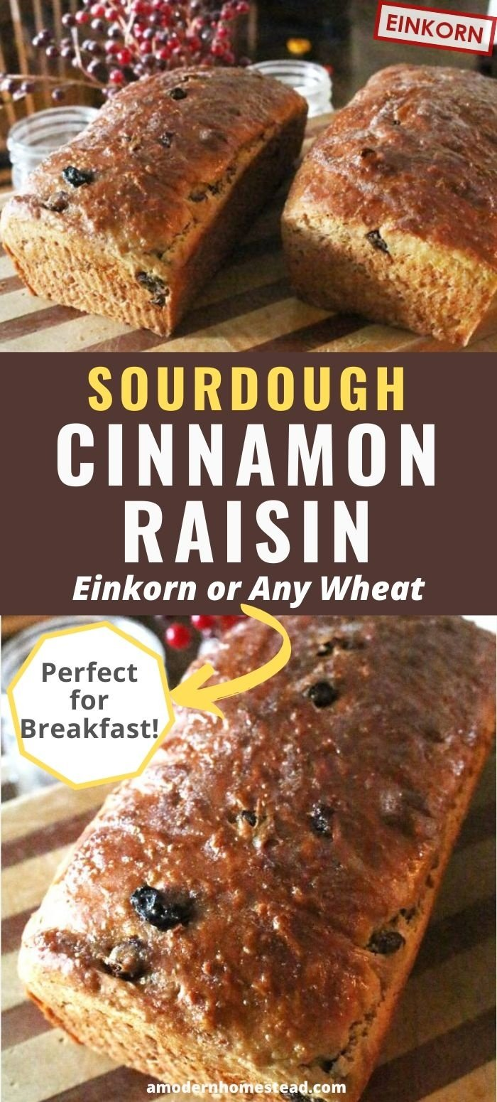 cinnamon rasin sourdough bread recipe pin