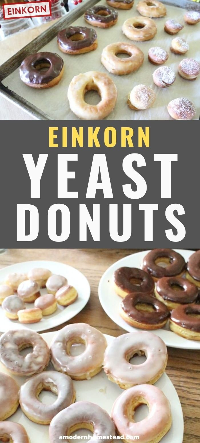 einkorn yeast donuts chocolate glazed powdered sugar pin