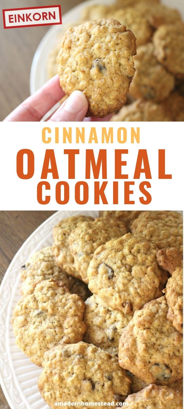 cinnamon oatmeal raisin cookies promo shot