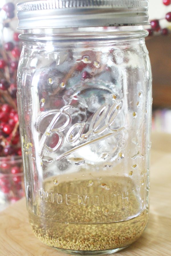 Alfalfa seeds in a mason jar and covered with water