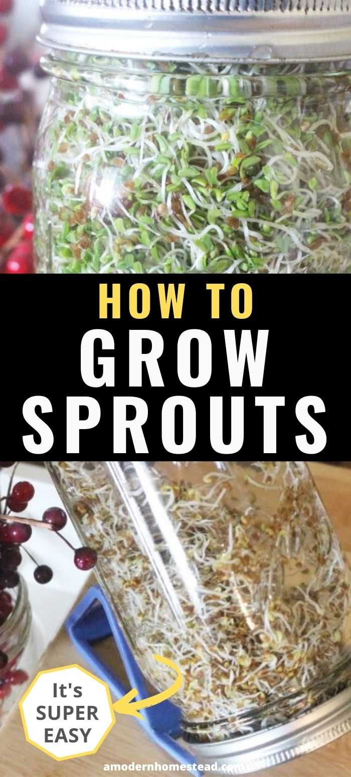 how to grow sprouts promo image