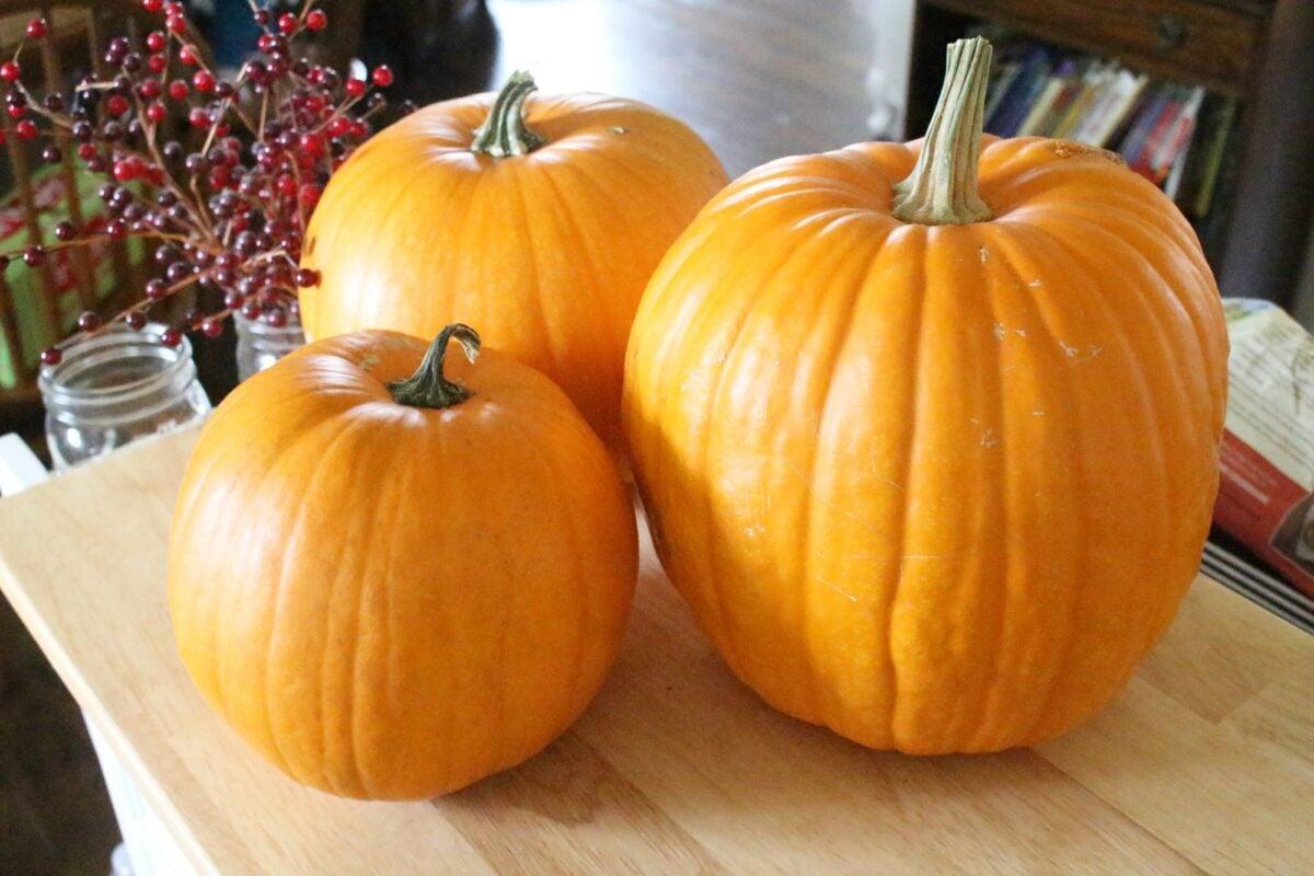 3 orange connecticut field pumpkins sitting on a wooden counter