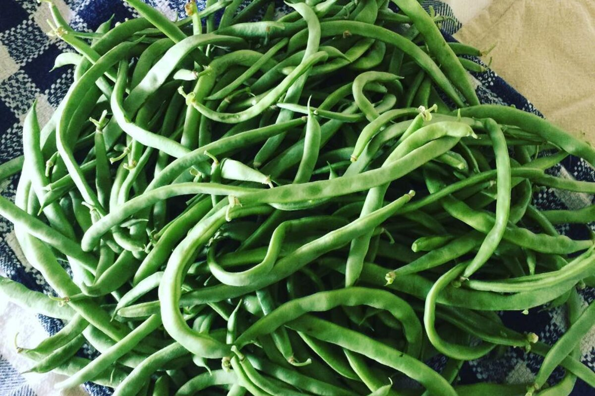 heirloom kentucky wonder green beans in a pile on the counter