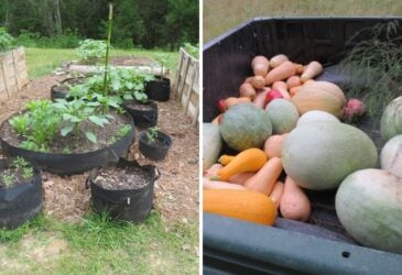 before and after picture of garden planning for beginners including a newly planted garden and the harvest it reaped!