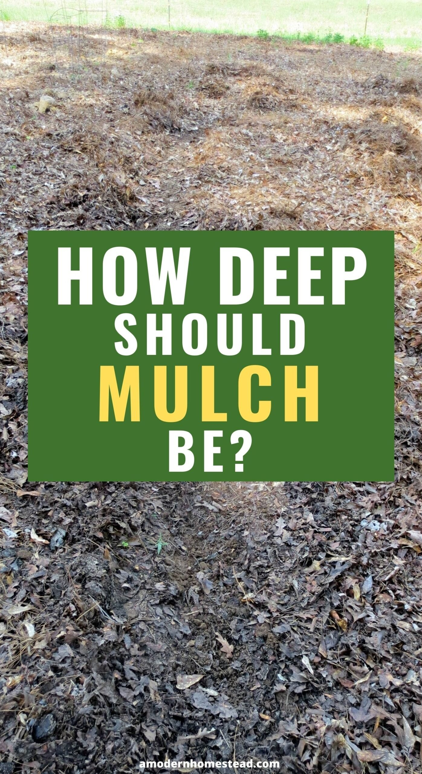 """promotional image featuring deep mulch in a garden and the question in text """"how deep should mulch be?"""""""